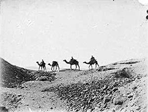 camel-o-camel-1