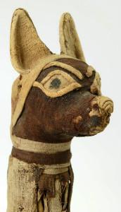 Mummified-Jackal