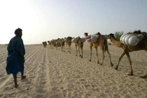Anna kameler